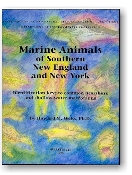 Marine Animals of Southern New England and New York