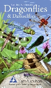 Guide to Northeastern Dragonflies and Damselflies.