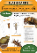 Flashcards of Common Freshwater Invertebrates - Set Two