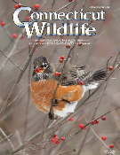Connecticut Wildlife magazine